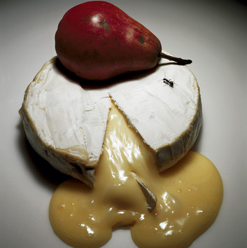 Irving Penn, Ripe Cheese, New York, 1992