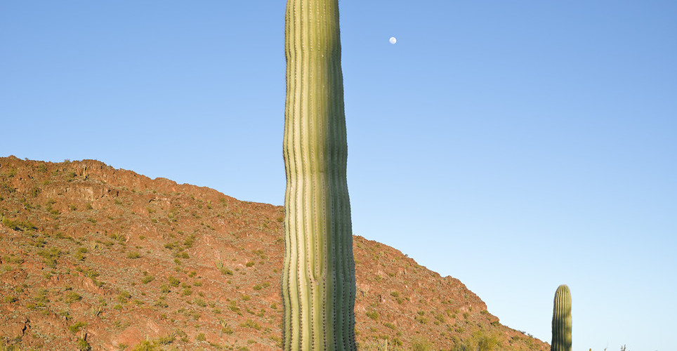 Mark Klett, Saguaro before sunset with shadow and moon, 2013
