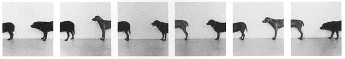 William Wegman, Folley, Saucy, Man Ray, 1973