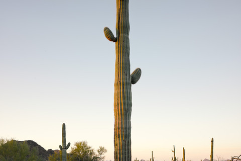 Mark Klett, Saguaro with two small arms, 2013
