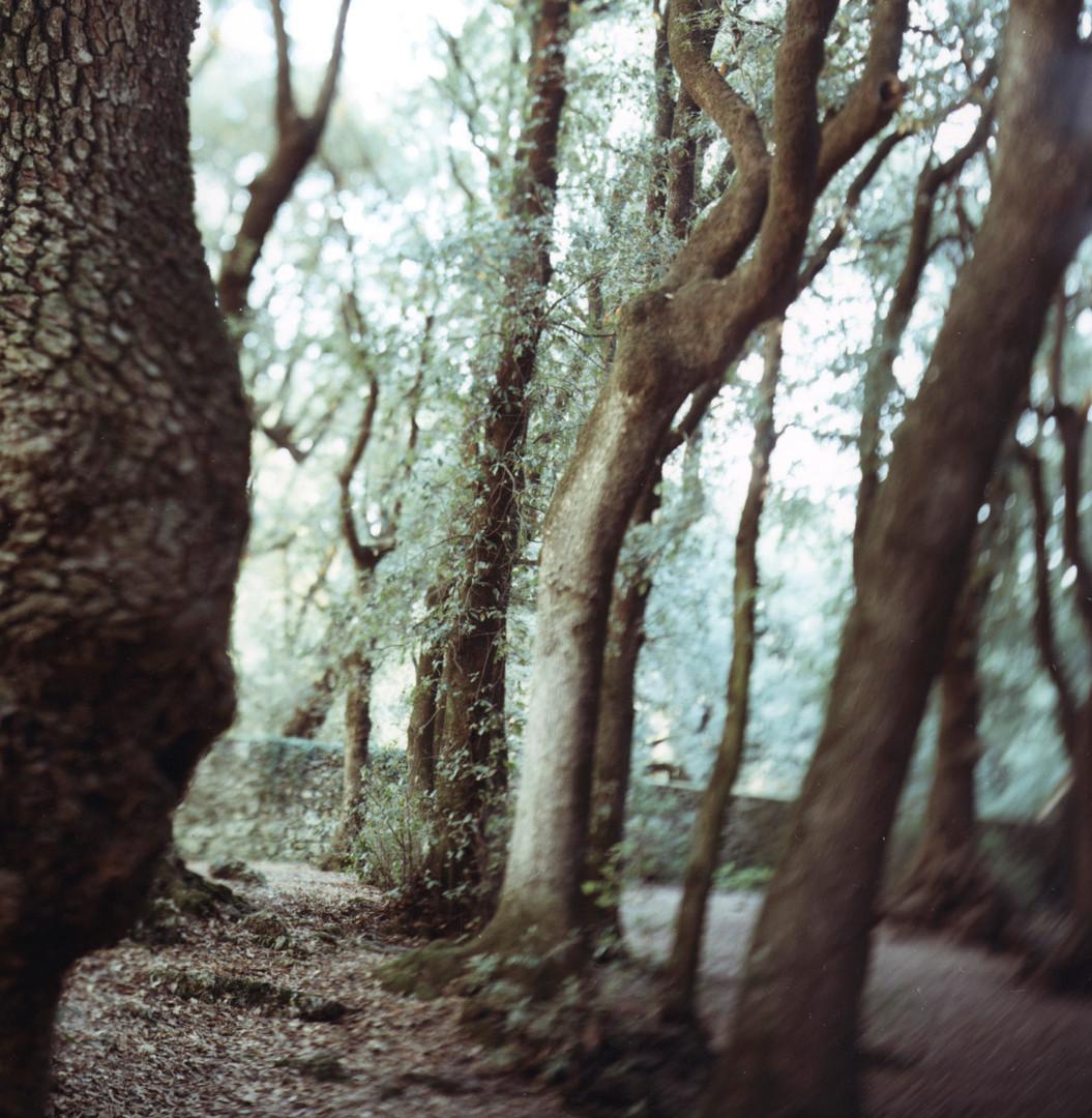 JoAnn Verburg, Sacred Trees (Under Water), 2000