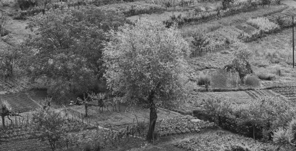 Emmet Gowin, Siena, Italy, 1975 gelatin silver print mounted to board