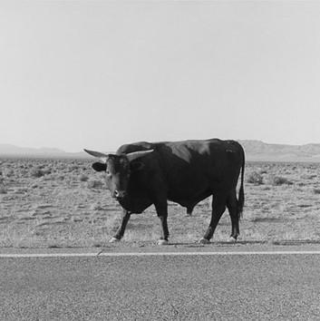 Henry Wessel, Nevada, 1986