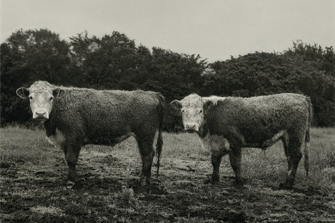 Peter Hujar, Butch and Buster, 1978