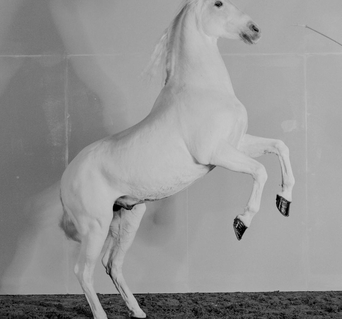 Richard Learoyd, 7 Horses (Horse 4), 2017
