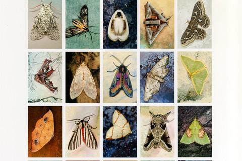 Emmet Gowin, Mariposas Nocturnas, Index No. 47, Departmento de Santa Cruz, Bolivia, 2012