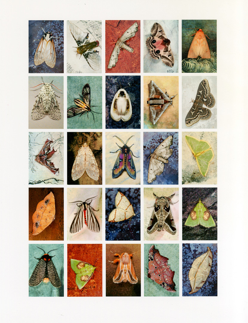 Emmet Gowin, Mariposas Nocturnas, Index No. 47, Departmento de Santa Cruz, Bolivia, 2012