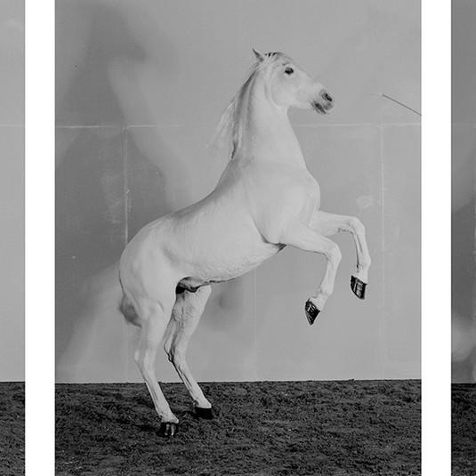 Richard Learoyd, 7 Horses, 2017