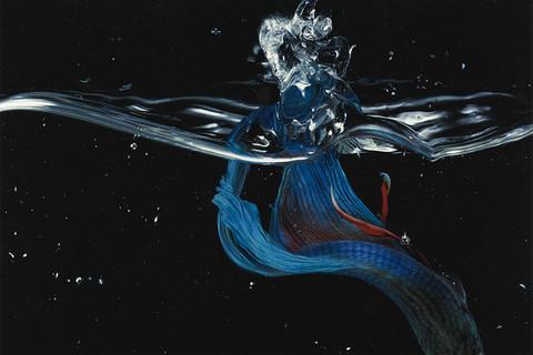 Hiro, Betta Splendens, New York City, 1981