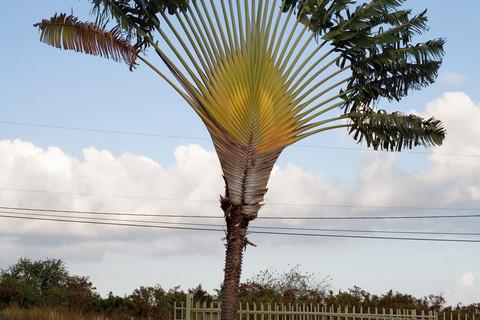 Richard Benson, Puerto Rico, 2007