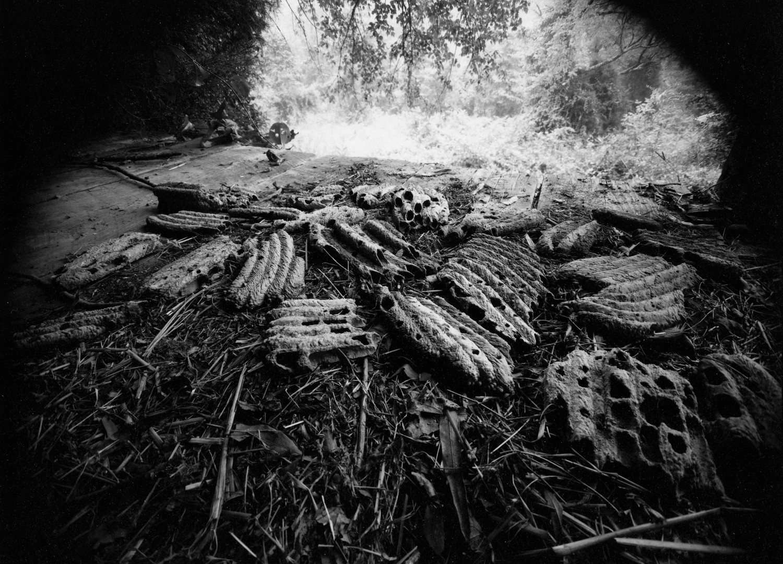 Emmet Gowin, Mud wasp nests, Halifax County, Virginia, 1973