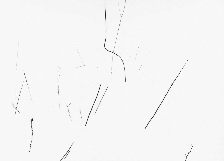 Harry Callahan, Grasses in Snow, Detroit, 1943