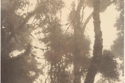 Emmet Gowin, Chiquitano Forest, Potrerillos del Guenda, Bolivia, 2015