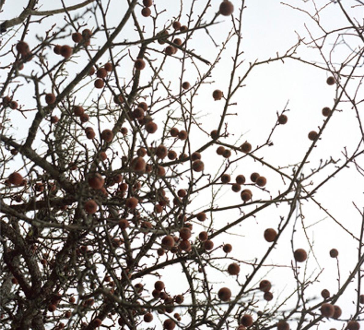 Jocelyn Lee, Untitled (apple trees in water from below), 2007