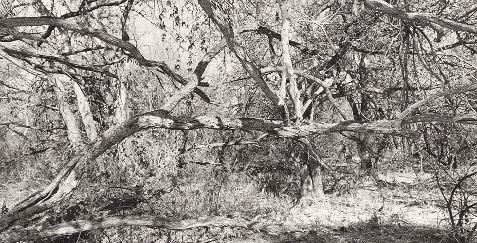Lee Friedlander, Arizona, 1999