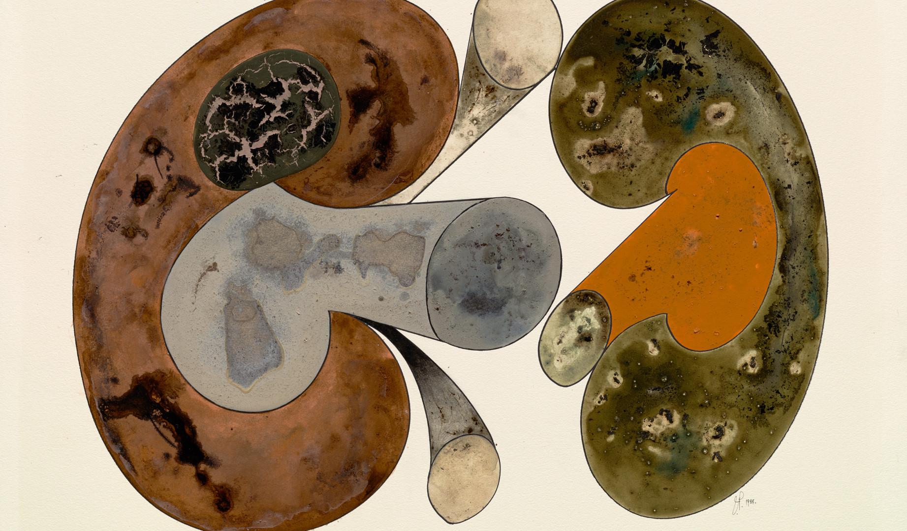 Irving Penn, Aging Mushrooms, New Yor