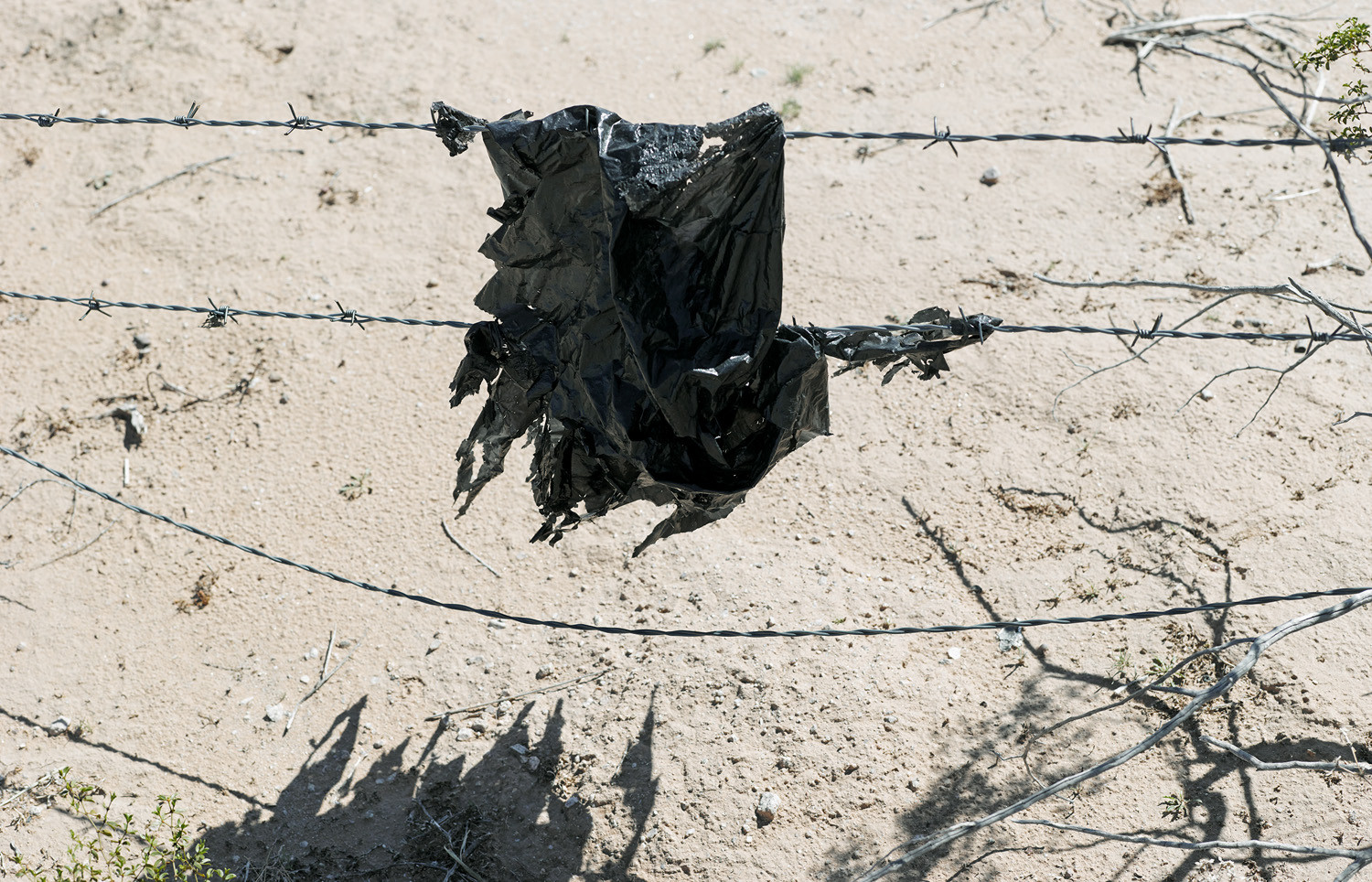 Mark Klett, Wind-tattered bag caught on barbed wire, 2013