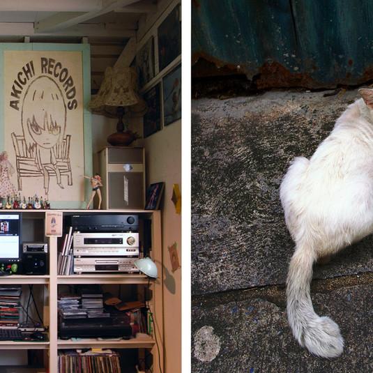 Yoshitomo Nara, Asylum / Bangkok cat, 2008