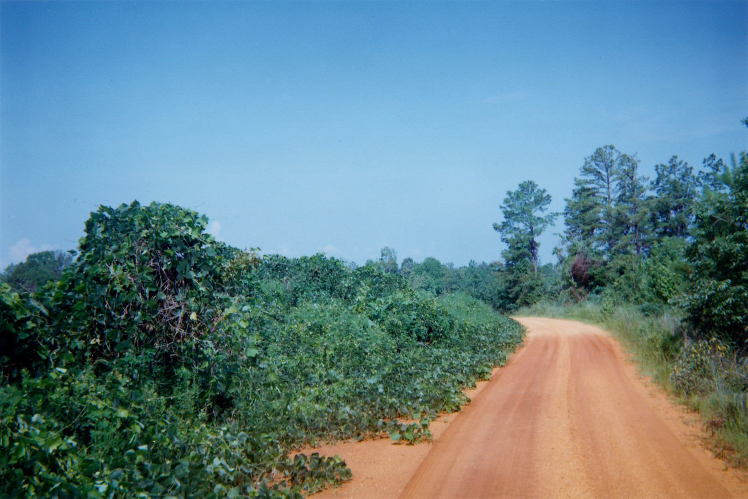 William Christenberry, Kudzu and Road, Hale County, Alabama, October, 1996