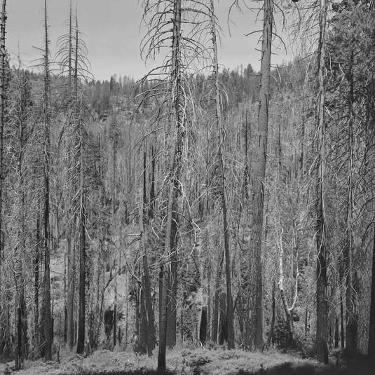 Richard Learoyd, Yosemite III, 2018
