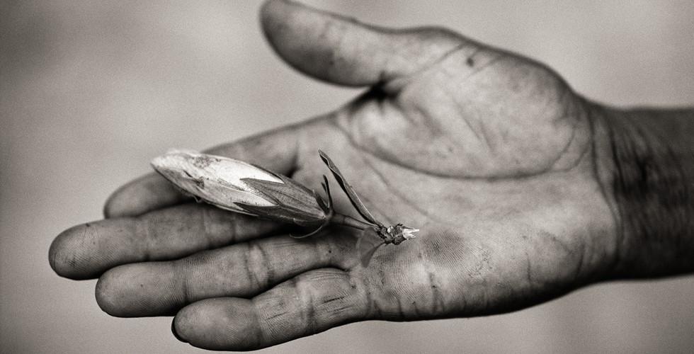Fazal Sheikh, The Hope Grasshopper, Dona Antonia's Wish-Ribbon Bracelet, Five Centuries Work the Land at, Black River, Brazil, 2001