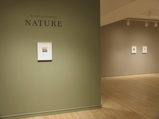 Harry Callahan: Nature