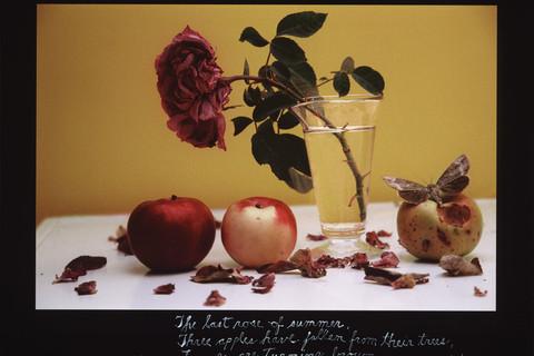 Duane Michals, The Last Rose of Summer, September 11, 2005