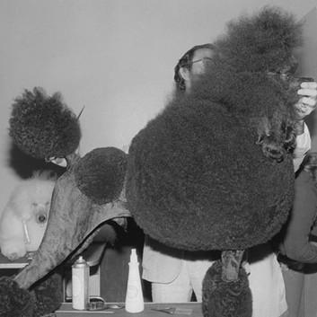 Henry Wessel, Dog Show, Oakland, 1981