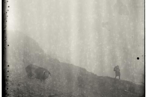 Adou, Fog, Child, Pig, 2006