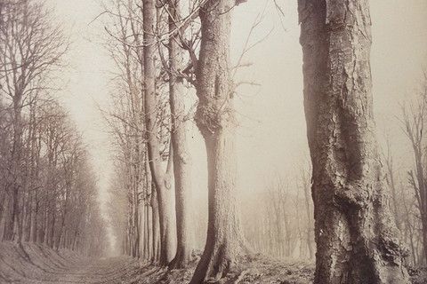 Eugène Atget, Saint Cloud (allèe du parc), 1924