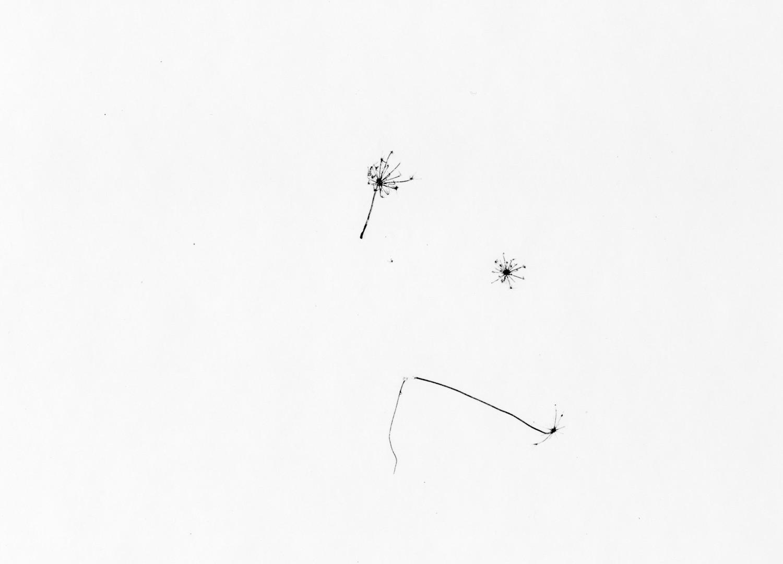 Harry Callahan, Grasses in Snow, Detroit, c. 1943