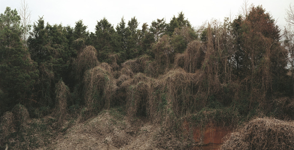William Christenberry, Kudzu with Red Soil Bank (Winter), near Akron, Alabama, 1981