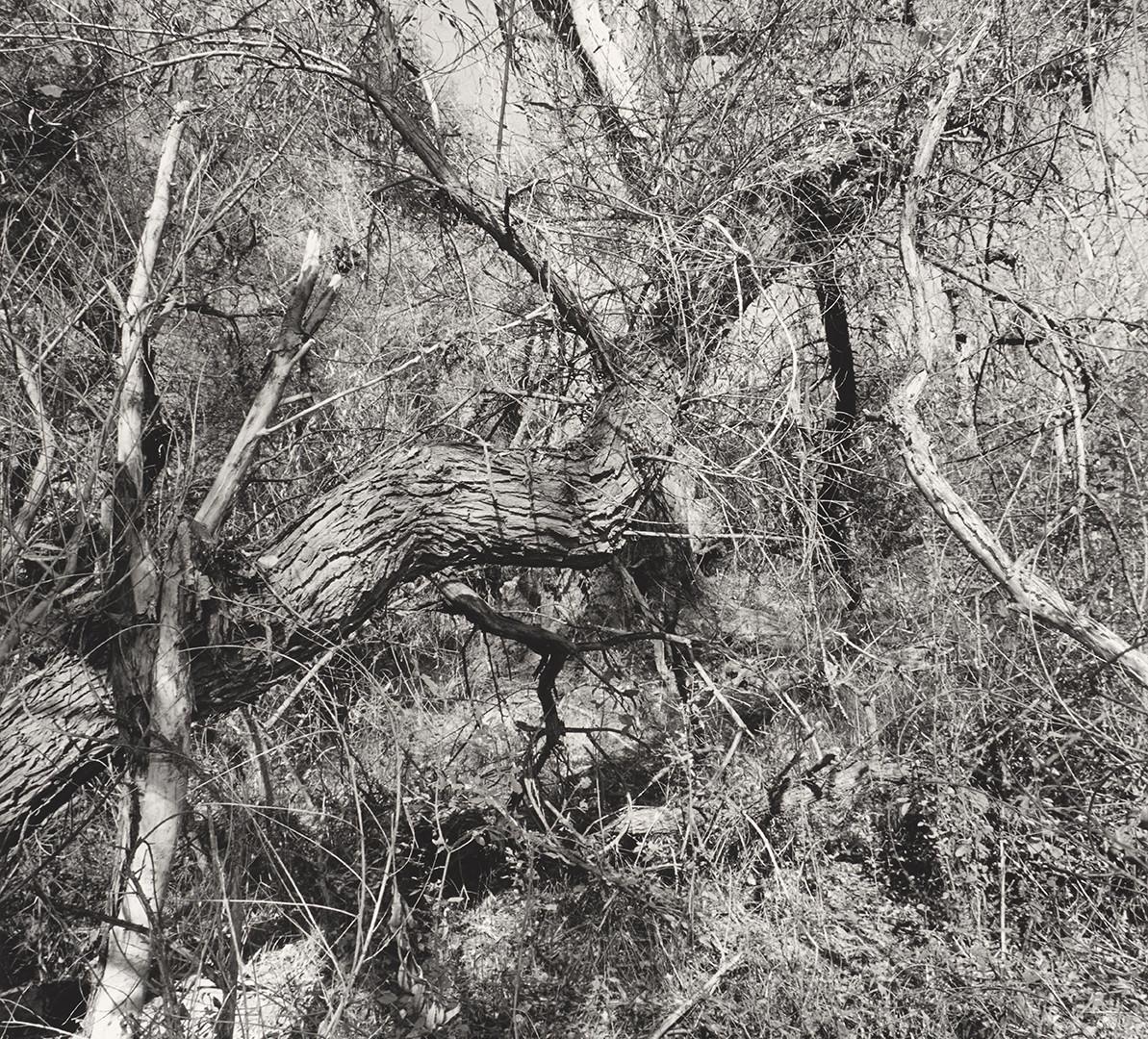 Lee Friedlander, Patagonia, Arizona, 1997