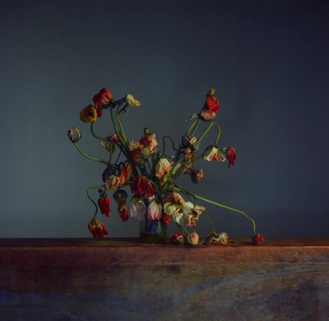 Richard Learoyd, Flowers, Day 4, 2019