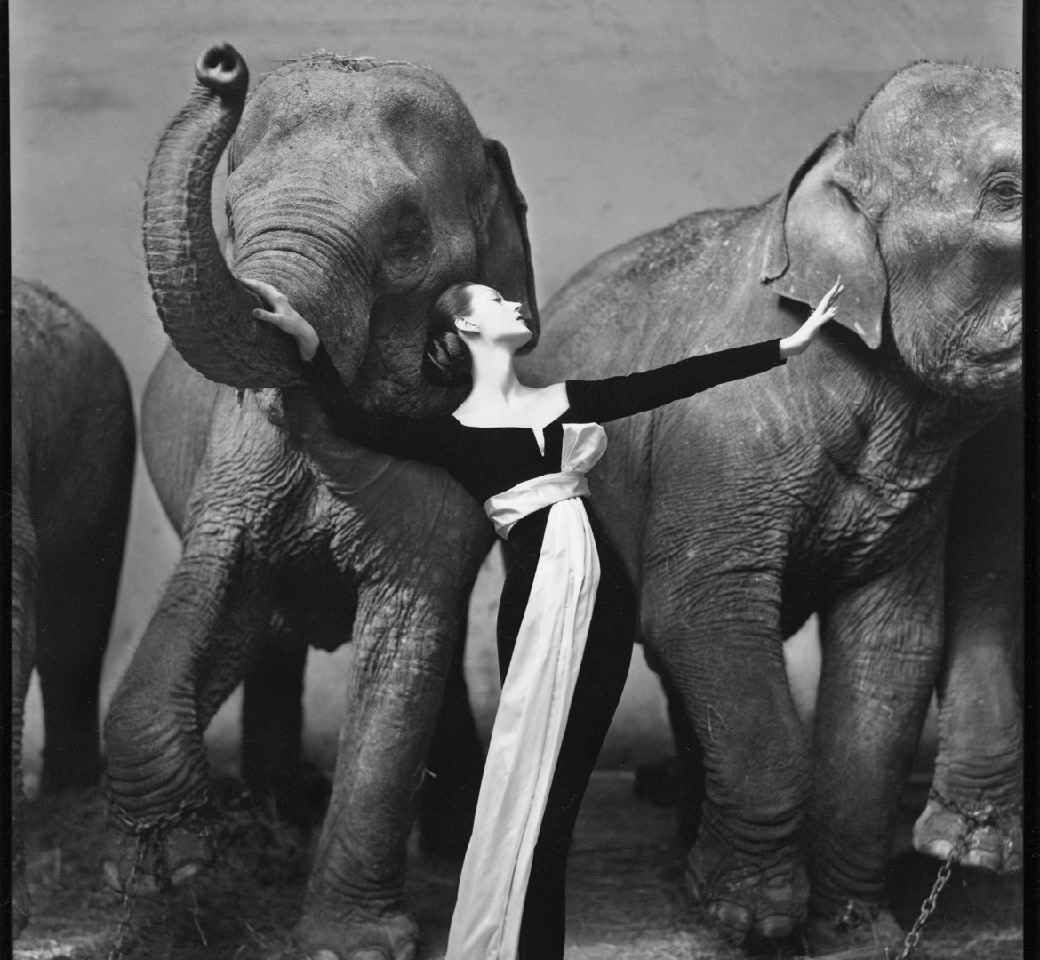 Richard Avedon, Dovima with elephants, evening dress by Dior, Cirque d'Hiver, Paris, August 1955