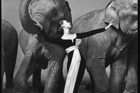 Richard Avedon, Dovima with elephants, evening dress by Dior, Cirque d'Hiver, Paris, August 1955