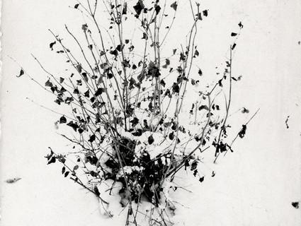 Harry Callahan, Untitled, 1948