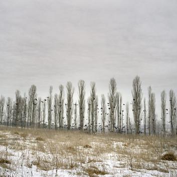 Jim Goldberg, Crows, Ukraine, 2007