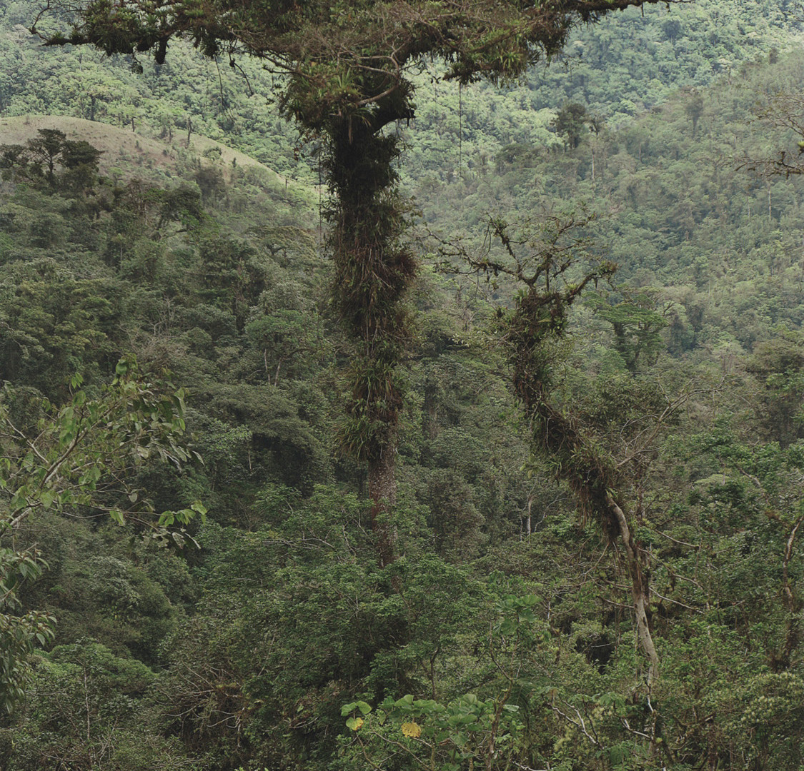Emmet Gowin, Primary mist forest near the Continental Divide, Chiruqui Province, Panama, 2008