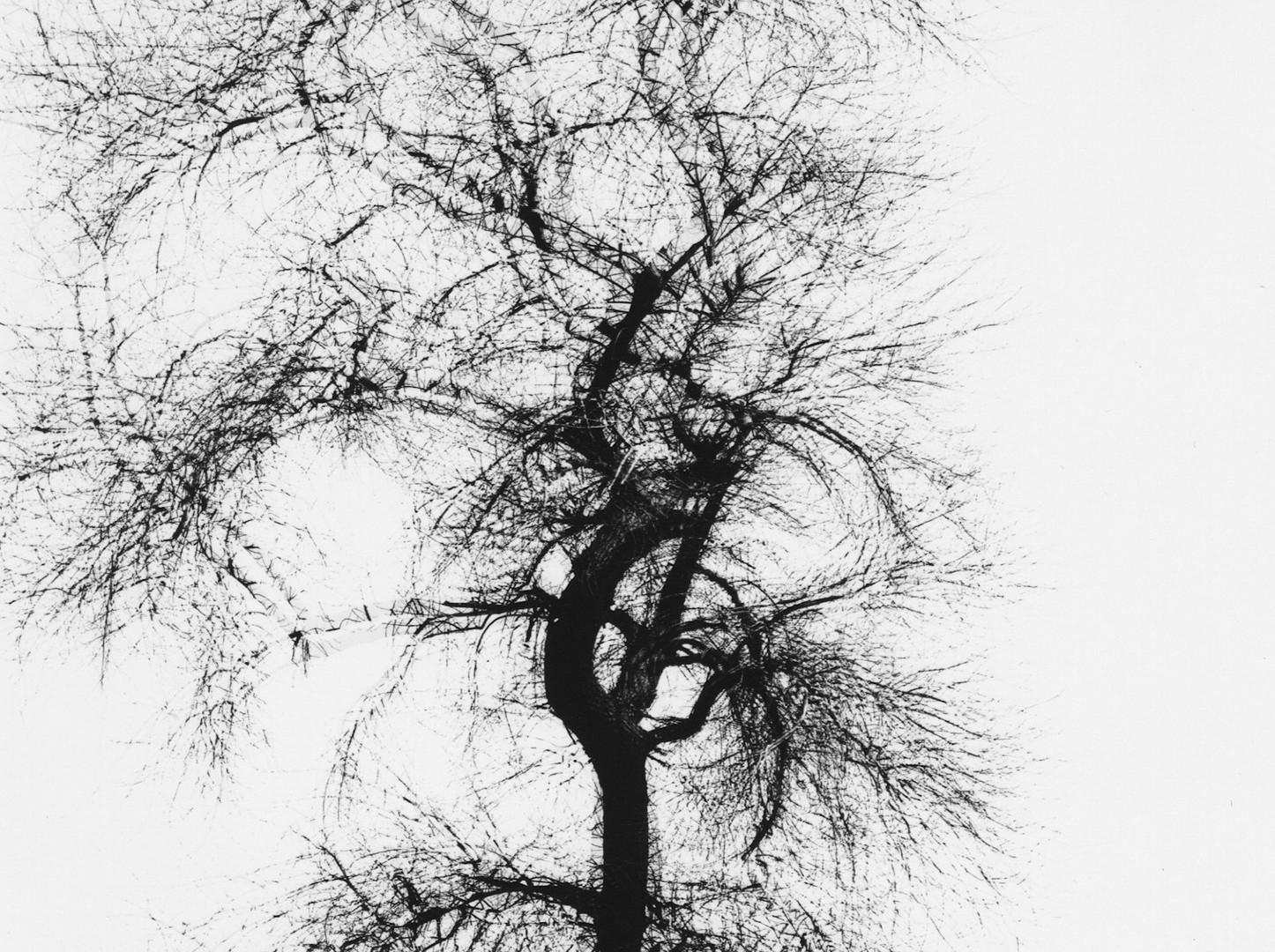 Harry Callahan, Multiple Exposure Tree, Chicago, 1956