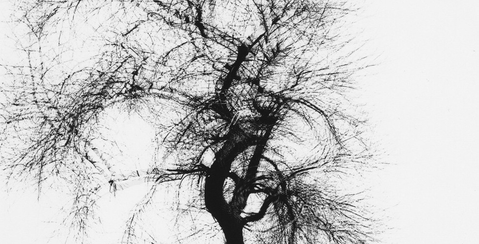 Harry Callahan, Multiple Exposure Tree, Chicago, 1956