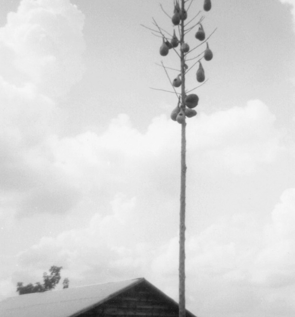 William Christenberry, Gourd Tree, Near Scuba, Mississippi, 1962