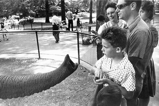 Garry Winogrand, Bronx Zoo, New York City, 1963
