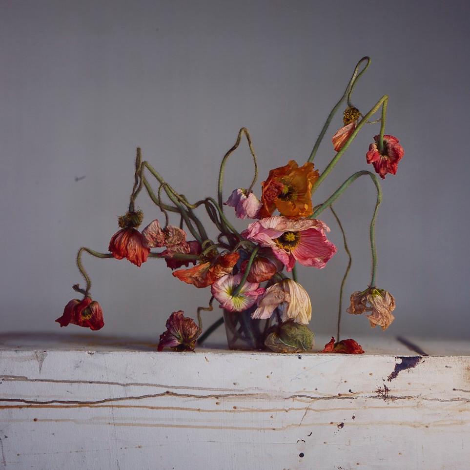 Richard Learoyd, Live & Dead Poppies, 2018