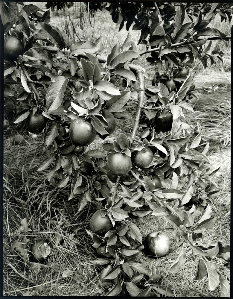 Nicholas Nixon, Stow, Massachusetts, 2012 gelatin silver print