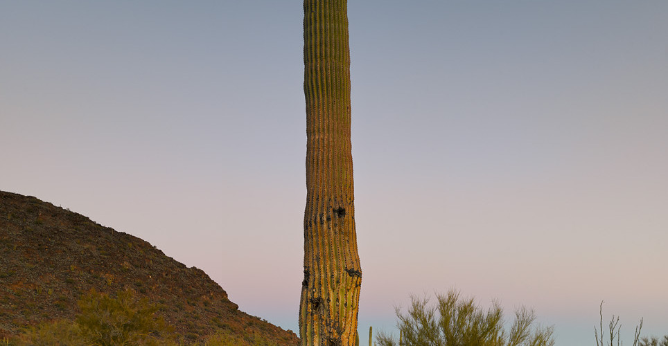 Mark Klett, Saguaro after sunset with moon, 2013