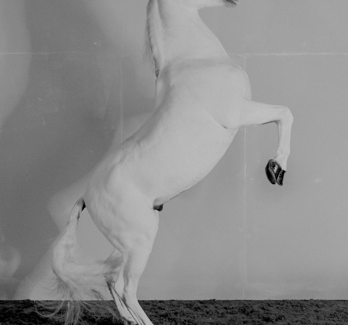 Richard Learoyd, 7 Horses (Horse 7), 2017