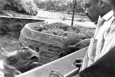 Garry Winogrand, Bronx Zoo, New York City, 1963