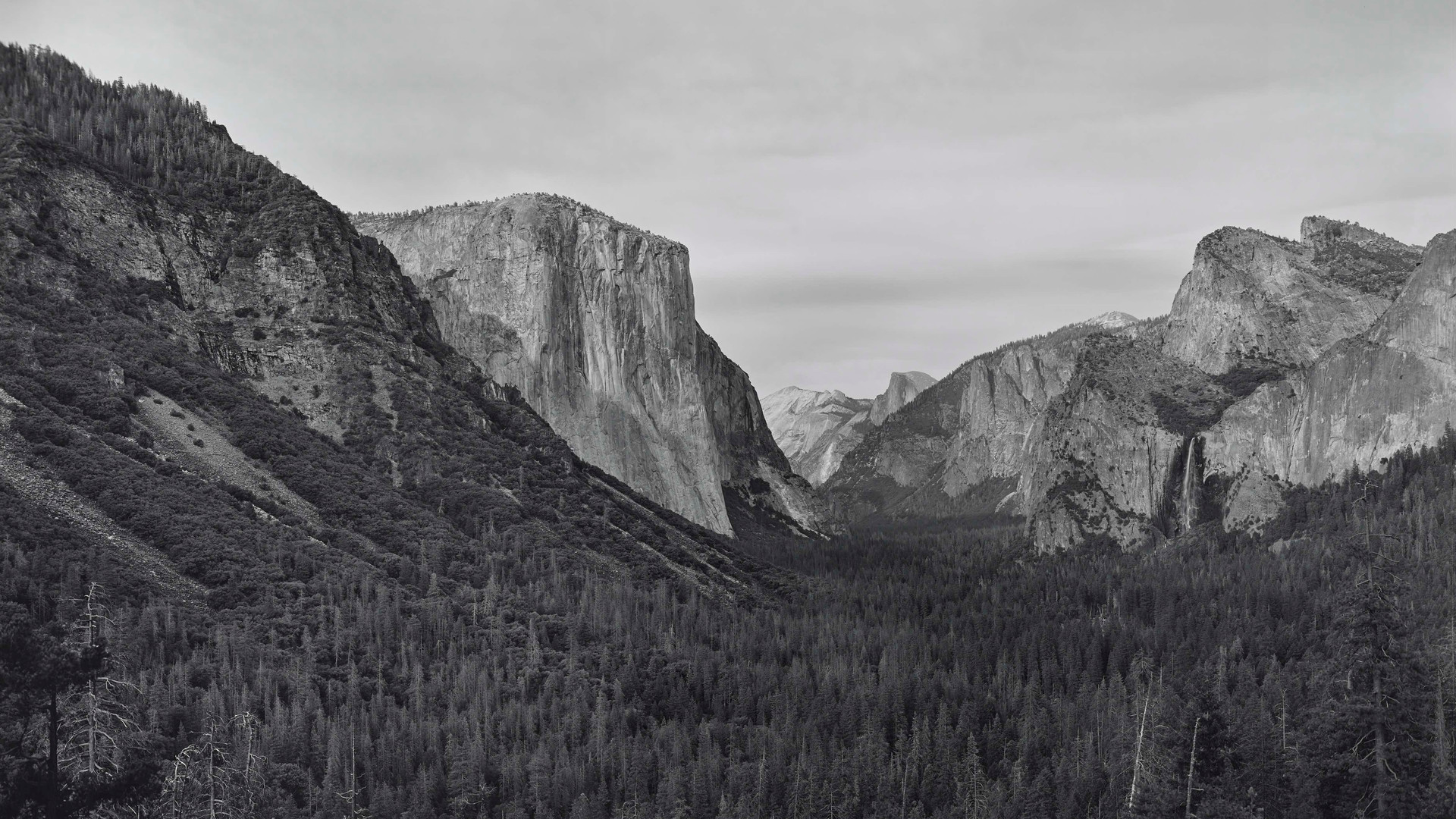 Richard Learoyd, Yosemite IV (BGV), 2018