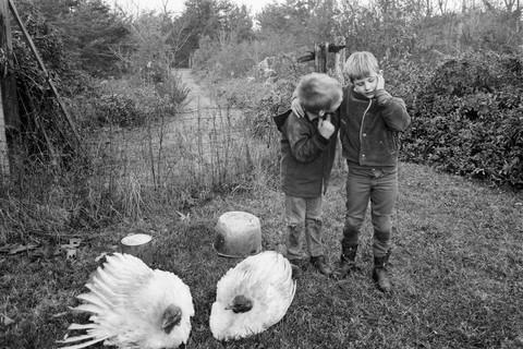 Emmet Gowin, Barry, Dwayne and Turkeys, Danville, Virginia, 1970